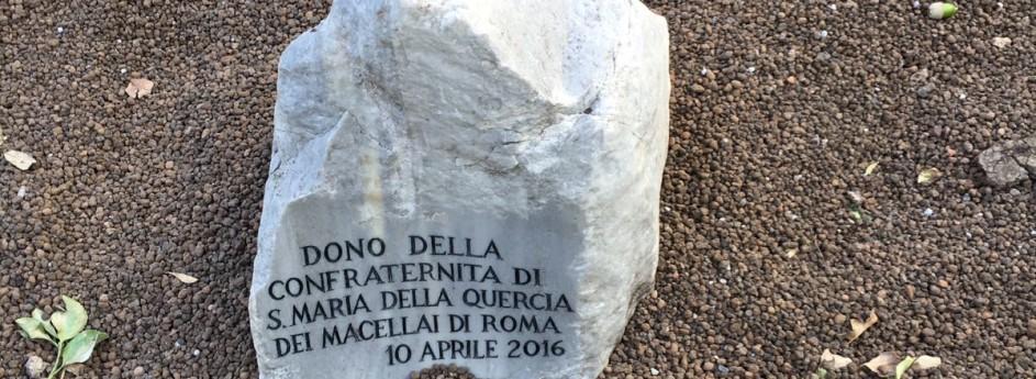 L'impegno della Confraternita nel ridare un nuovo albero a Piazza della Quercia