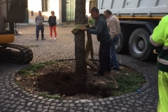 rimozione quercia