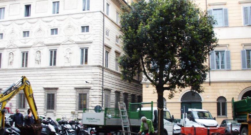 Una nuova quercia per la Piazza